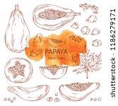 collection of papaya and papaya ... | Shutterstock .eps vector #1186279171