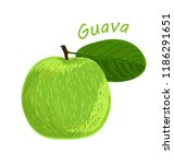 guava  fruit doodle drawings... | Shutterstock .eps vector #1186291651