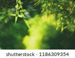 closeup nature view of green... | Shutterstock . vector #1186309354