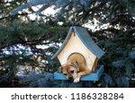 Dog In Birdhouse