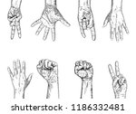 fists hands up concept of unity ... | Shutterstock .eps vector #1186332481