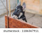 close up portrait of puppy...   Shutterstock . vector #1186367911