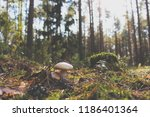 mushrooms in the autumn forest. ... | Shutterstock . vector #1186401364