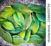 fresh garden leaves bell... | Shutterstock . vector #1186455754