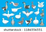 Various Cute Geese Breeds...