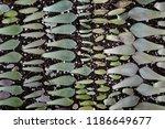 succulent plant propagation  | Shutterstock . vector #1186649677