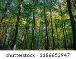 autumn forest trees. nature... | Shutterstock . vector #1186652947
