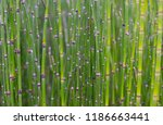 lush green background of plants | Shutterstock . vector #1186663441