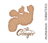 hand drawn ginger root  spicy... | Shutterstock .eps vector #1186671511