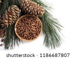 cedar pine nuts  branches and... | Shutterstock . vector #1186687807