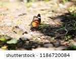 butterfly on the ground with... | Shutterstock . vector #1186720084