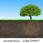soil with apple tree and roots... | Shutterstock . vector #1186739947