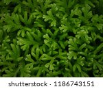 green leaves pattern background.... | Shutterstock . vector #1186743151