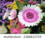 gerbera is native to tropical... | Shutterstock . vector #1186812724