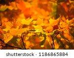 yellow with orange autumn maple ... | Shutterstock . vector #1186865884