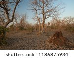 termite mound and dry deciduous ... | Shutterstock . vector #1186875934