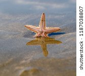 a beautiful starfish on the... | Shutterstock . vector #1187038807