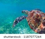 sea turtle in tropical seashore ...   Shutterstock . vector #1187077264