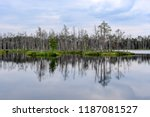 reflections of dead tree trunks ... | Shutterstock . vector #1187081527