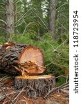pine tree cut down ready for... | Shutterstock . vector #118723954