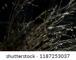 beautiful water droplets on the ... | Shutterstock . vector #1187253037