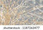 close up of grass. a texture... | Shutterstock . vector #1187263477