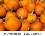 Bright Orange Pumpkins At...