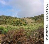 felled trees in the field  cut... | Shutterstock . vector #1187351737