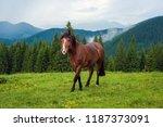 grazing horse at high land...   Shutterstock . vector #1187373091