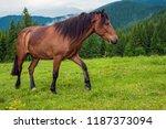 grazing horse at high land...   Shutterstock . vector #1187373094
