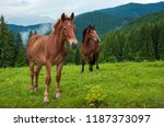 grazing horse at high land... | Shutterstock . vector #1187373097