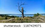 broken dry tree above volga... | Shutterstock . vector #1187429071