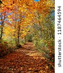 footpath in the autumnal forest ... | Shutterstock . vector #1187464594