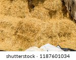 pile of the rectangular straw... | Shutterstock . vector #1187601034