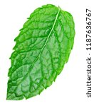 mint leaves isolated on white... | Shutterstock . vector #1187636767