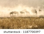 Small photo of Buffalo Herd In A Dust Bowl