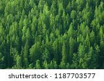 Texture Coniferous Forest Top...
