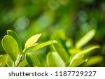nature view of green leaf on... | Shutterstock . vector #1187729227