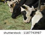 cattle eating hay | Shutterstock . vector #1187743987