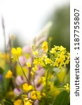 flowers on a background blur.... | Shutterstock . vector #1187755807