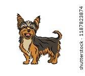 Yorkshire Terrier Dog  ...