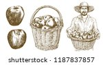 man holds basket with apples.... | Shutterstock .eps vector #1187837857