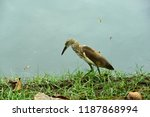 many species of birds are at... | Shutterstock . vector #1187868994