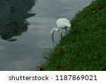many species of birds are at... | Shutterstock . vector #1187869021