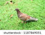 many species of birds are at... | Shutterstock . vector #1187869051
