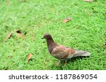 many species of birds are at... | Shutterstock . vector #1187869054