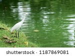 many species of birds are at... | Shutterstock . vector #1187869081