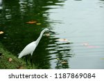 many species of birds are at... | Shutterstock . vector #1187869084