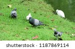 many species of birds are at... | Shutterstock . vector #1187869114