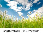 lot of dandelions close up on... | Shutterstock . vector #1187925034
